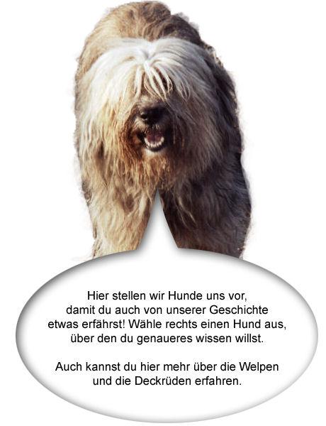 stellen mit hunden